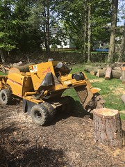 0B9EC53E-52B2-433C-A8E7-C98E6BECC743 (Lakeview Stump Grinding) Tags: lakeview columbia strongsville stump grinding ohio station north royalton cleveland berea olmsted falls landscaping bay village northeast service grind removal