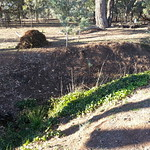 "English Ivy partial removal fromdrain ditch 20190428_160126 <a style=""margin-left:10px; font-size:0.8em;"" href=""http://www.flickr.com/photos/61627737@N03/47666995412/"" target=""_blank"">@flickr</a>"