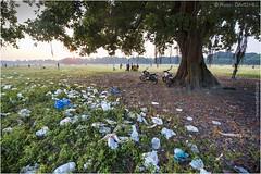 The Litter Tree (channel packet) Tags: india kolkata maidan tree litter rubbish environment davidhill