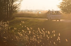 Dangast an der Nordsee 1/4 (DasWarmblut) Tags: germany deutschland dawn abend sun car auto sonne nordsee sea see schilf