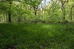 ... (jogifoto) Tags: germanyduisburgbaerlbaerler busch