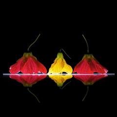 Japanese Maple Lantern Trio (Explore) (Pixel Fusion) Tags: nature nikon flora flower aperture macro d600 photoshop japanesemaplelantern