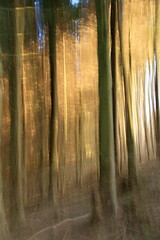 Hillside wood (paulw7od) Tags: icm woodland abstract outside exmoor somerset eos canon tamron