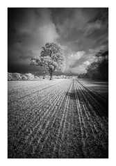 Hamstreet / April 26th (Edd Allen) Tags: uk southeast eastsussex england greatbritain nikon landscape seascape clouds atmosphere atmospheric sunset d610 infrared nikond610 bw blackandwhite sun spring cuckmerehaven cuckmere windswept trees treescape country countryside hamstreet field