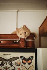 Bored. (AlexanderHorn) Tags: cat cats cute feline pet animal bored cutie beautiful still