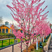 1 tree Tuesday in Pink_-3