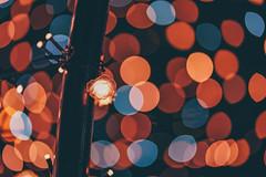 蝴蝶地景公園 (aelx911) Tags: a7rii a7r2 sony fe85 fe85f18 landscape night light taiwan taipei travel bokeh 台灣 台北 板橋 蝴蝶地景公園 夜景