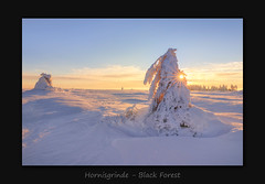 Hornisgrinde (MC--80) Tags: black forest hornisgrinde