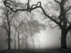 Hunting Hollow Fog Series 1 (StefanB) Tags: 1235mm 2019 californa em5 fog henrycoe hiking mood tree treescape outdoor statepark huntinghollow