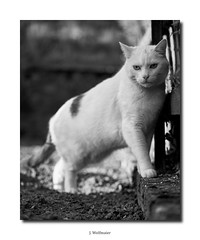 DSC07306 (J.Wolfmaier) Tags: sonyalpha animal cat cats