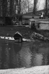 Under the bridge (lumpy79) Tags: praktica mtl5 helios44m 258 ilford hp5 400 1600 blackandwhite bw budapest újpest feketefehér duck kacsa vadkacsa szúnyogsziget