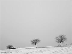 Winter Impression (Maximilian Busl) Tags: schwarzweis himmel leere landschaft natur bäume zedtwitz winter töpen bayern deutschland trees lonely landscape lines snow bw sky grey cold hasselblad