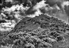 Cratère Commerson, Reunion / Кратер Комерсон, Реюньон (dmilokt) Tags: природа nature пейзаж landscape гора mountain вулкан кратер crater volcan лава lava дорога road dmilokt чб bw черный белый black white