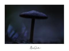 Diehard (Marian Smeets) Tags: mushroom paddenstoel bomalsurourthe belgium belgie ardennen bokeh mariansmeets macro macrophotography macrofotografie natuur nature natuurfotografie nikond750 2019 nikkormacrolens105mmf28 nikcollection