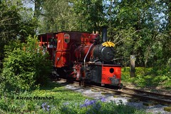 LM44 at Stradbally, 21/4/19 (hurricanemk1c) Tags: railways railway train trains ireland industrialrailway narrowgauge stradbally stradballywoodlandsrailway 2019 lm44 bórdnamóna irishturfboard steamloco andrewbarclay clonsatworks
