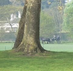 20190422 Prince Philip in Home Park (rona.h) Tags: ronah 2019 april princephilip thames datchet homepark horseandtrap
