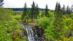 Mighty waterfall on The Isle of Mull. (peterileypics) Tags: mull isleofmull scotland river waterfall green lush trees tree forest landscape lightroom nature