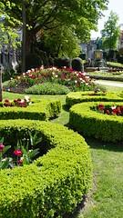 2019-04-22_13-51-17_ILCE-6300_DSC12866_Kiri (Miguel Discart (Photos Vrac)) Tags: 2019 31mm belgie belgique belgium bru brussels bruxelles bxl bxlove divers e18200mmf3563ossle fleurs flowers focallength31mm focallengthin35mmformat31mm ilce6300 iso100 parc park sony sonyilce6300 sonyilce6300e18200mmf3563ossle