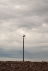 - (Ian Stoll) Tags: simple symmetry birds nature outdoors clouds