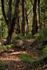 Mount Dial Tasmania