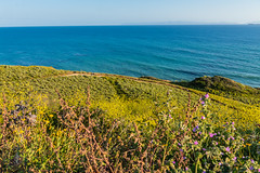 Cliff and Wildflowers View at Ocean Trails Reserve at Trump National Golf Club (SCSQ4) Tags: california catalinaisland cliff favorite favoritepicture hikingtrail losangeles ocean oceantrailsreserve ranchopalosverdes trumpnationalgolfclub view wildflowers