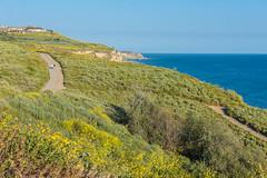View of the Hiking Trails at the Ocean Trails Reserve at Trump National Golf Club (SCSQ4) Tags: california hikingtrails losangeles ocean oceantrailsreserve ranchopalosverdes superbloom trumpnationalgolfclub wildflowers