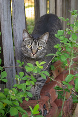 penny (jillian rain snyder) Tags: cat pet animal outdoors