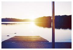 Tranquilité (Anita MW) Tags: tranquilité paix coucherdusoleil narrabeenlake sunset film pellicule olympus kodak colorplus 200 canards ducks citation