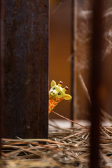 Hide and seek (Ballou34) Tags: 2019 7dmark2 7dmarkii 7d2 7dii afol ballou34 canon canon7dmarkii canon7dii eos eos7dmarkii eos7d2 eos7dii flickr lego legographer legography minifigures photography stuckinplastic toy toyphotography toys giraffe stuck in plastic hide seek animal