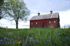 Along The Way (aaron_gould) Tags: national coth5 outside nikkor sunset sky nature green flowers art light sun clouds landscape trees yellow house red d7000 old white blue barn ohio