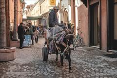 Ah I Ah I (Heinrich Plum) Tags: heinrichplum plum fuji xe2 xf27mm marokko morocco marrakech marrakesch donkey esel warentransport goodstransport streetphotography street streetphotographie candid