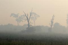 Morning mist at Duba Plains - Delta of Okavango – Botswana (lotusblancphotography) Tags: africa afrique botswana okavango nature landscape paysage mist brume trees arbres
