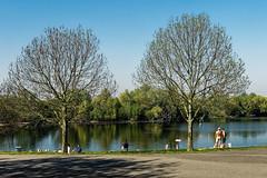 Zwei Bäume am See (KL57Foto) Tags: 2019 april badesee germany hitdorffrühling kl57foto landschaft leverkusen leverkusenhitdorf nrw nordrheinwestfalen omdem1 olympus see