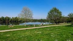 Hitdorfer See im April II (KL57Foto) Tags: 2019 april badesee germany hitdorffrühling kl57foto landschaft leverkusen leverkusenhitdorf nrw nordrheinwestfalen omdem1 olympus see