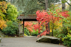 Sanctuary (g-liu) Tags: seattle park garden leaves trees foliage outdoor path gate japanese washington fall autumn 2018 october sony a6500 35mm rock darktable
