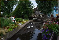 Canal (Colmar, Alsacia, Francia, 26-7-2011) (Juanje Orío) Tags: colmar francia 2011 france europa europeanunion europe unióneuropea alsacia canal agua water jardín garden flor flower reflejo reflection