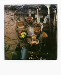 au jardin (JJ_REY) Tags: aujardin inthegarden instantfilm colors colors600 polaroidoriginals polaroid635cl colmar alsace france