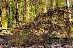 41 - Forbach en Avril 2019 (paspog) Tags: forbach lorraine france forêt wald forest woods bois printemps sping frühling avril april 2019