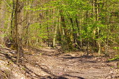40 - Forbach en Avril 2019 (paspog) Tags: forbach lorraine france forêt wald forest woods bois printemps sping frühling avril april 2019