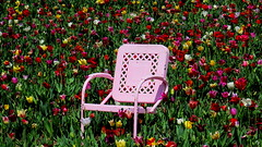 Pink chair in the tulips  Explored 4/24/2019 Thank you! (Hayseed52) Tags: tulips flowers chair pink colorful spring virginia
