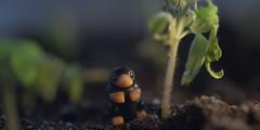 Niffler on a rainy day (Kelko585) Tags: minifigure minifig minifigures macro afol adventure adventures lego harry potter