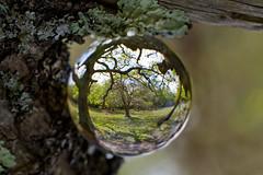 _MG_4575 (phreddyy) Tags: glass sphere crystal photo newforest england uk hampshire woodland country countryside location wildlife tree trees grass animal cow horse holly sunny sunnyday canon 5d2 5dmkii canon5dmkii orb ball