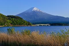 Mountain Fuji 富士山 (Vincent_Ting) Tags: 富士山 河口湖 日出 雲彩 倒影 mountainfuji clouds reflections bluesky dawn 晨曦 lake 日本 山梨縣 japan lakekawaguchi yamanashiprefecture