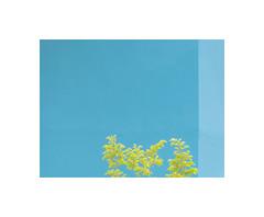 6100537 (ufuk tozelik) Tags: ufuktozelik tree leaves yellow teal wall corner sunlight urban city