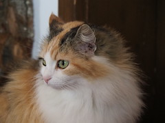 Pretty Kitty (M_Strasser) Tags: cat switzerland reigoldswil suisse svizzera schweiz katze