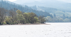 On the Banks - Loch Eck April 2019 (GOR44Photographic@Gmail.com) Tags: loch eck argyll cowal scotland gor44 water trees mist g9 panasonic leica 1260mmf284 spring green
