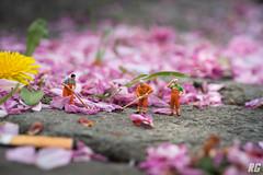 What remains... (Rudi G.) Tags: preiser preiserphotography miniatur mini cherryblossom cherry blüte kirschblüte blütenblätter müll strase reinigung besen arbeiter street löwenzahn