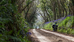 2019 Bike 180, Ride 26, 23rd April. (Photopedaler) Tags: 2019bike180 cornishcycling countrylanes bluebells trees bicycle backroads springcycling