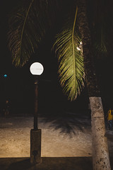 _MG_3294 (waychen_c) Tags: philippines ph visayas centralvisayas bohol provinceofbohol panglao municipalityofpanglao panglaoisland alonabeach boholsea sea beach coast coastline seascape island night nightscape tree coconuttree cebutour2019 菲律賓 維薩亞斯 維薩亞斯群島 中維薩亞斯 保和 保和省 邦勞 邦勞島 阿羅那海灘 海灘 沙灘 南洋 2019宿霧旅行