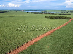 Alf Ribeiro 0282-174 (Alf Ribeiro) Tags: agribusiness agriculture brazil brazilian ethanol fuel rural saopaulo aerial agricultural background bio business cane cellulose cropland drone ecology energy environment farm farming farmland field foliage food fresh green grow healthy industry land landscape leaf natural nature organic plant plantation production road row sky stem sugar sugarcane sweet travel tropical view